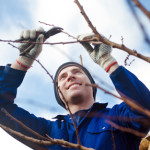 Questions for Tree Care Service
