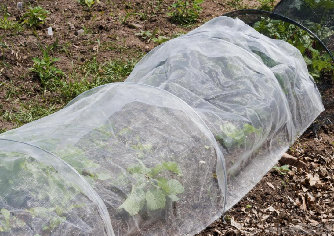 Use Frost Cloth For Plants This Winter Foreman S