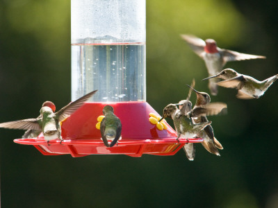 Attracting Hummingbirds Foreman S General Store