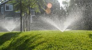 Fescue Lawn Tips