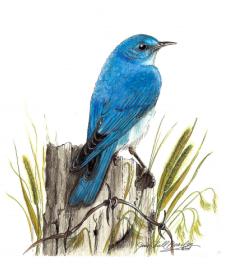 Artwork by Jane Beasley, Birds & Beasleys for the Great Backyard Bird Count