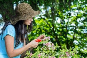 Pruning Trees, Plants and vegetables